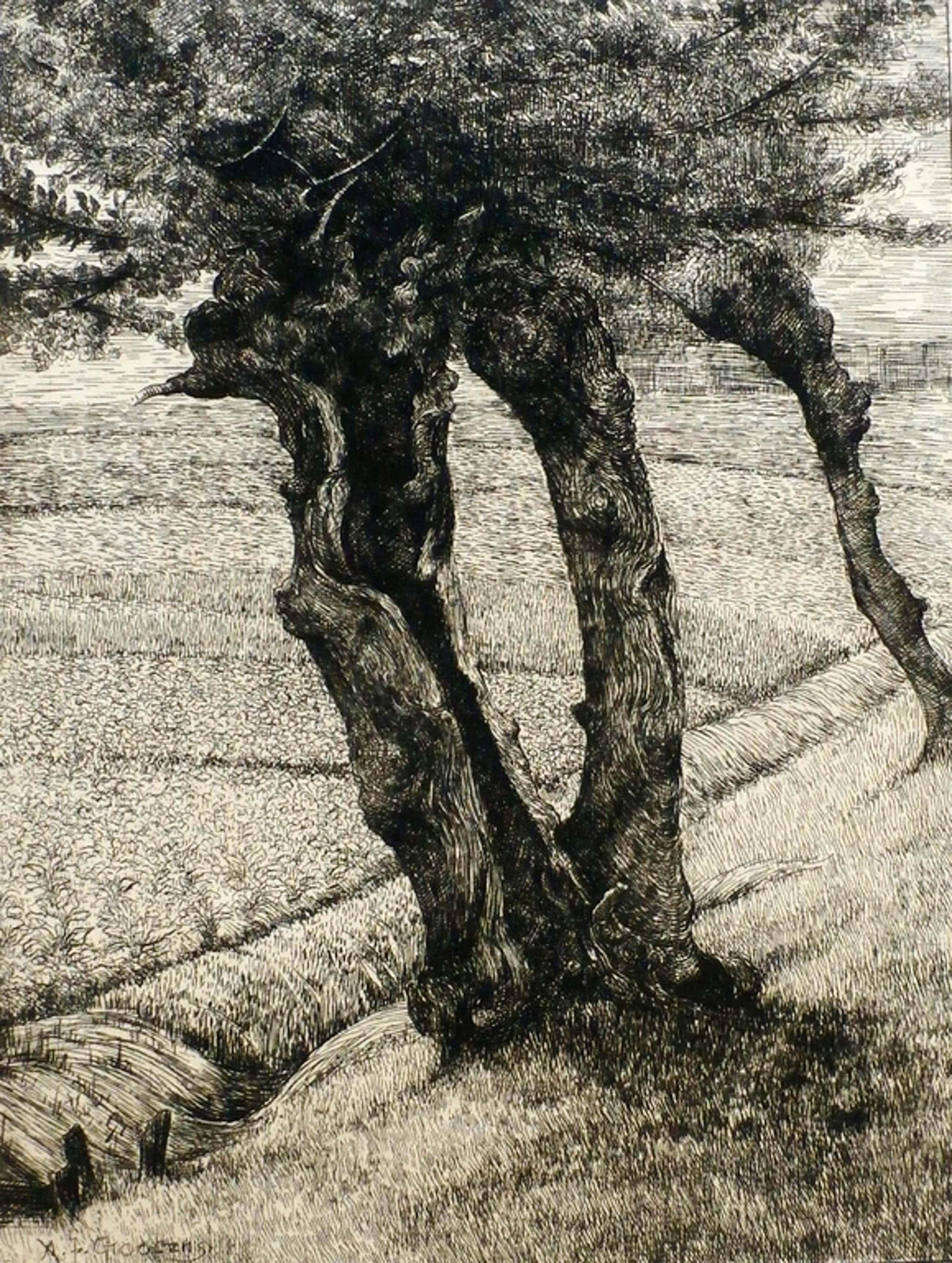 Adrianus Johannes Grootens - Ets:  bomen kopen? Bied vanaf 45!