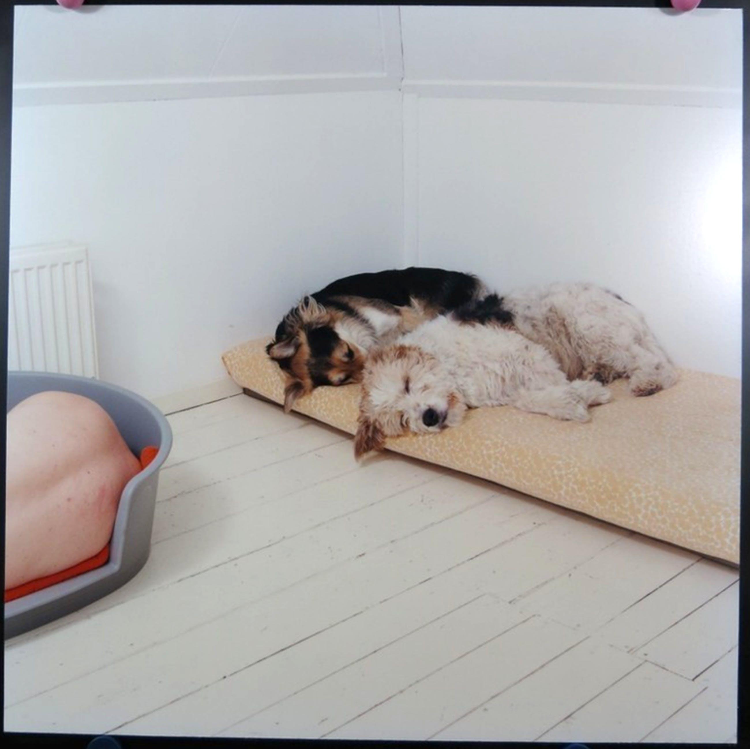 Maarten Wetsema - Foto - Zelfportret met Honden kopen? Bied vanaf 45!