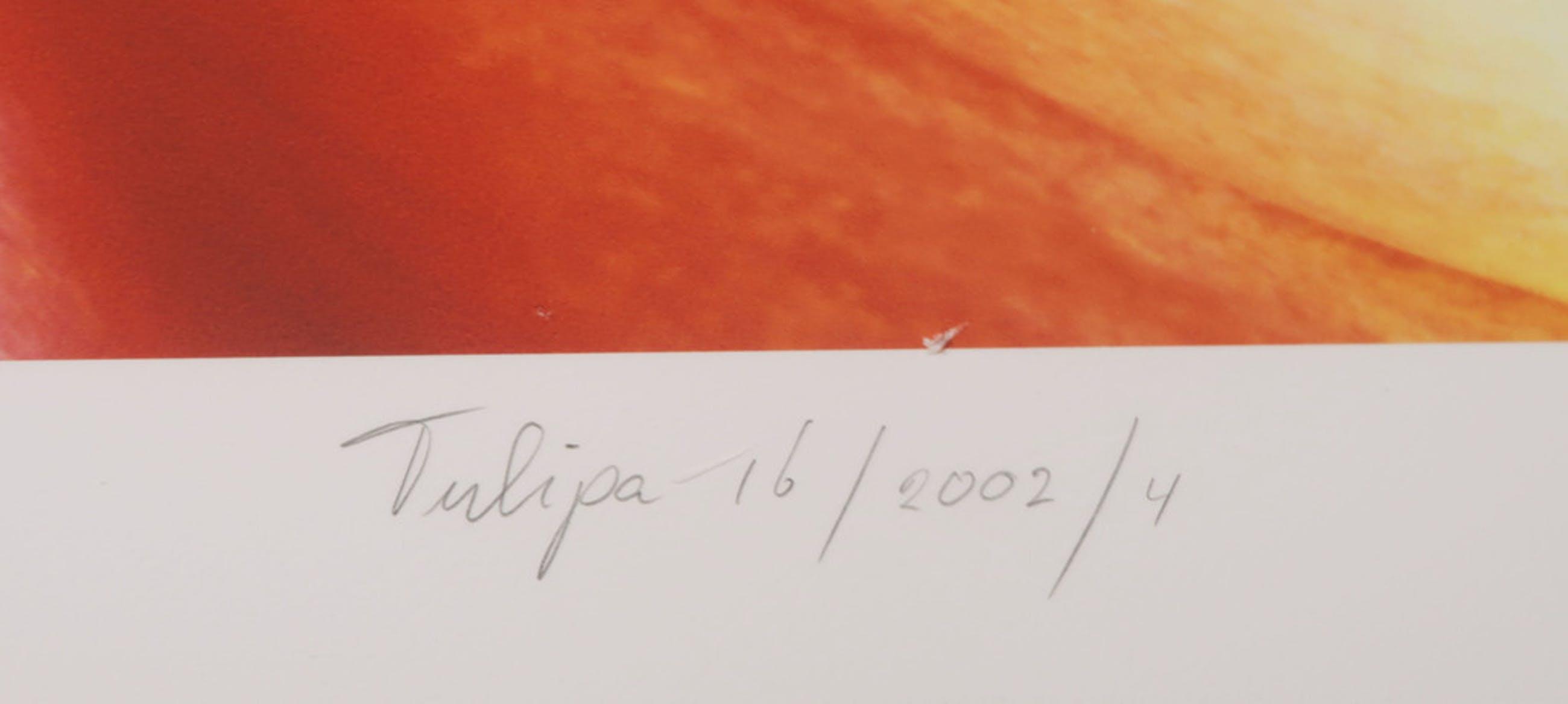 Joop Vos en Maria Berkhout: Giclee, Tulipa 16 (Groot) kopen? Bied vanaf 50!
