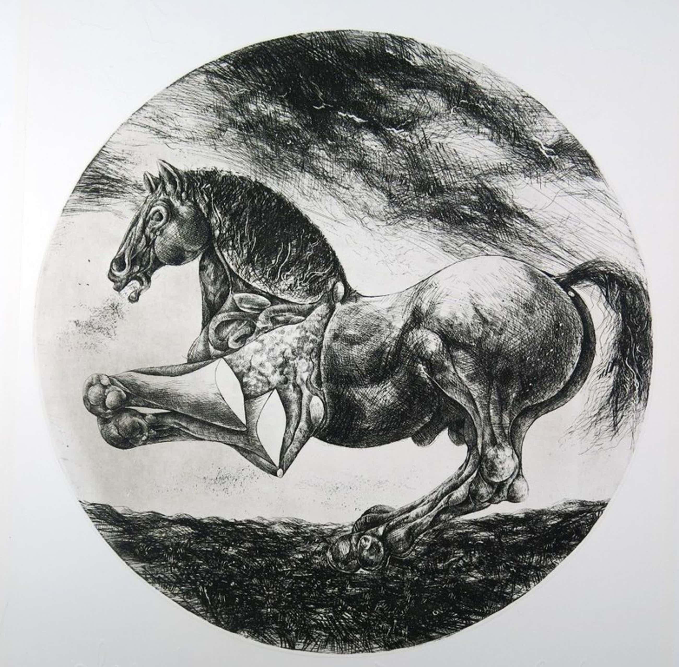 Willem Snitker: Ets, blinddruk, Paard  kopen? Bied vanaf 36!