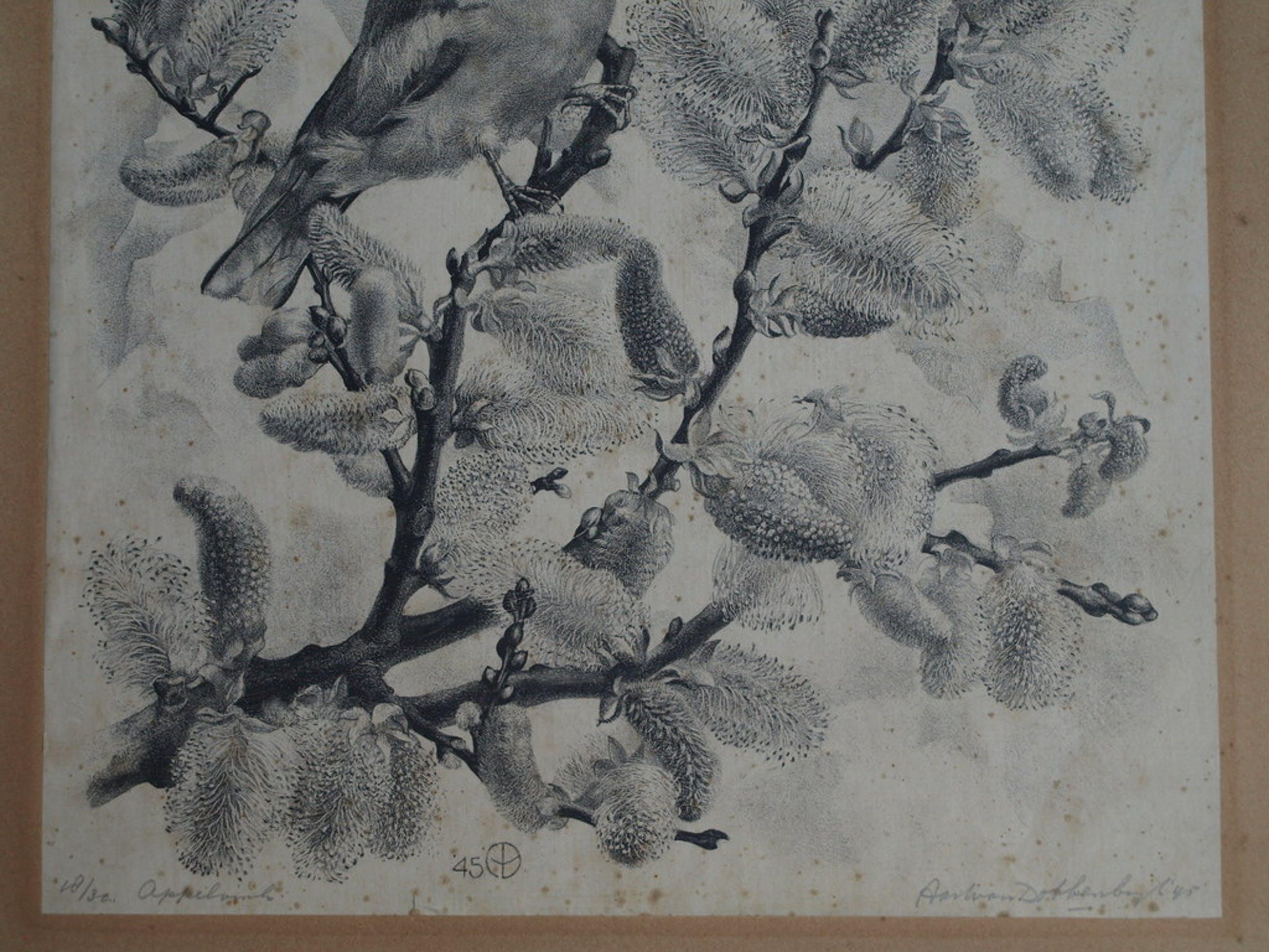 Aart van Dobbenburgh : Litho , Appelvink – Gesigneerd – 1945 – oplage 30 kopen? Bied vanaf 1!