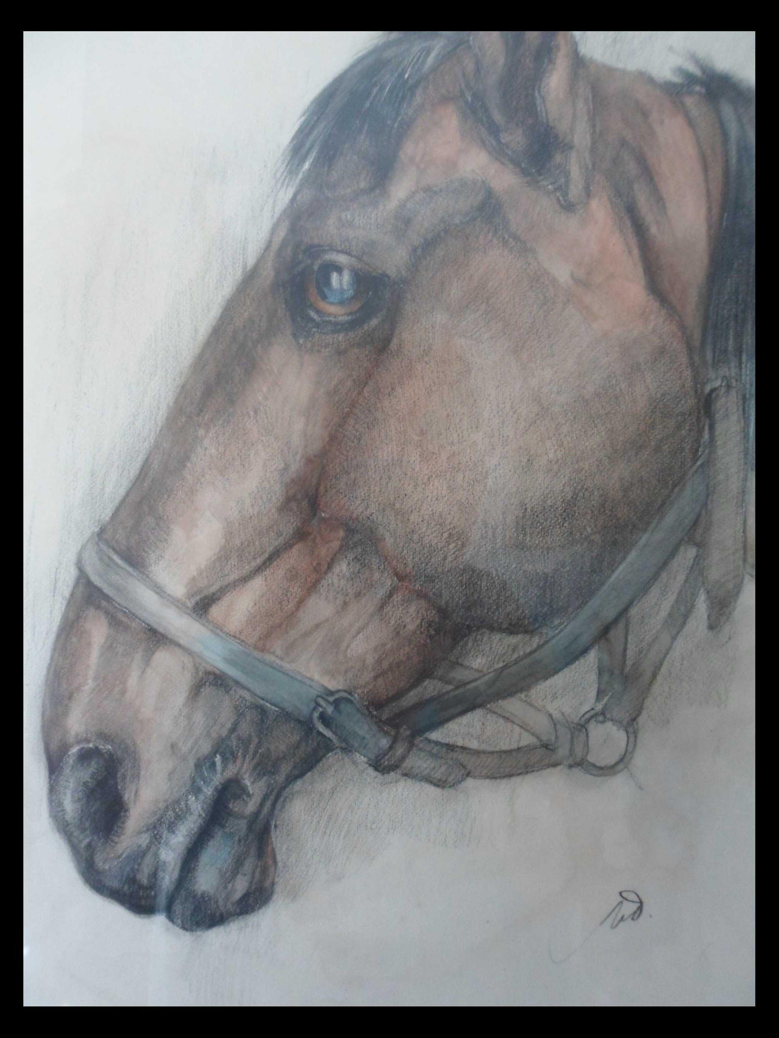 Tini van Doornik - Pastel/Krijt. Paardenhoofd. kopen? Bied vanaf 15!