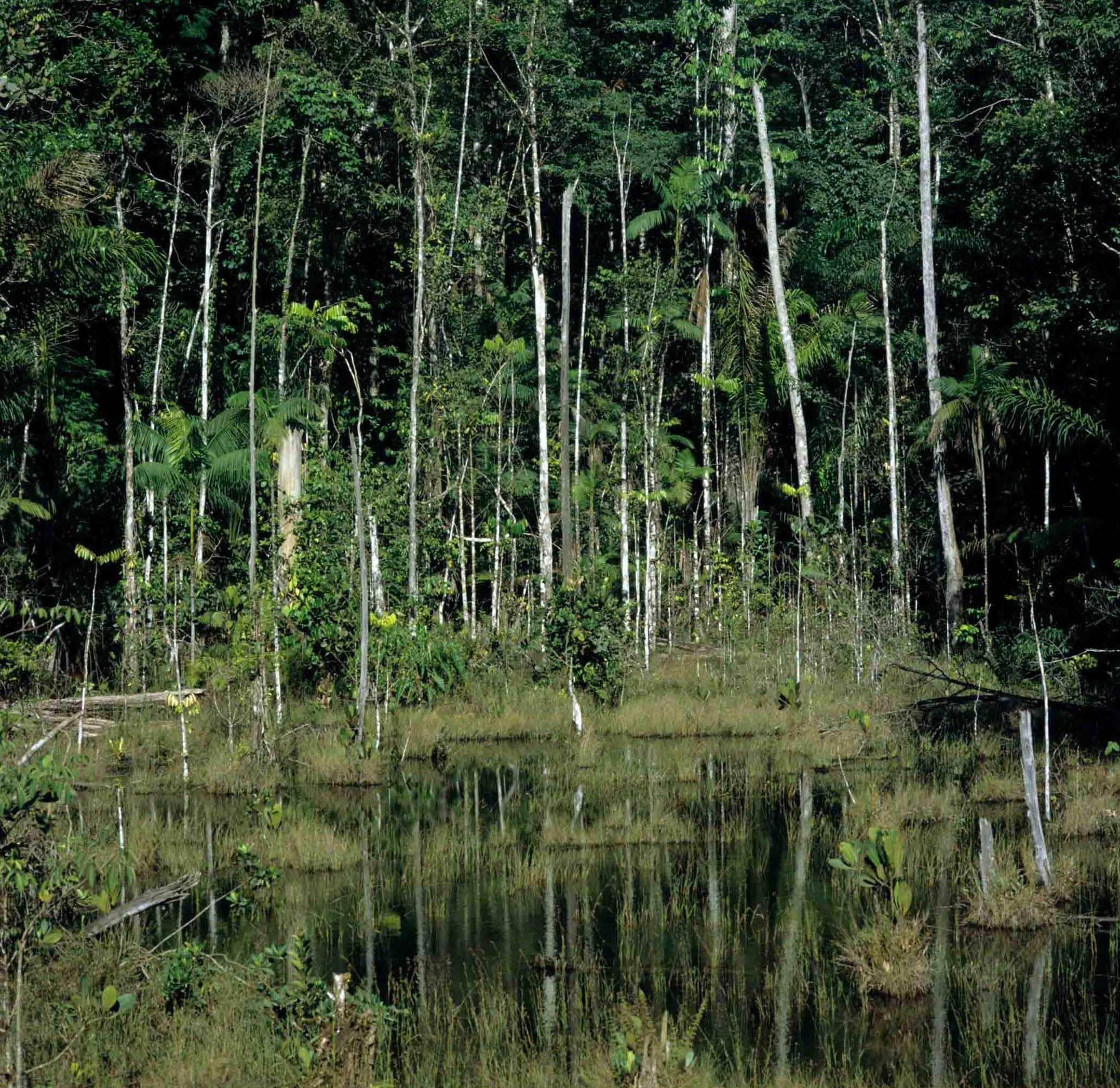 Diederik van Goethem - Tropisch oerwoud, Suriname kopen? Bied vanaf 695!